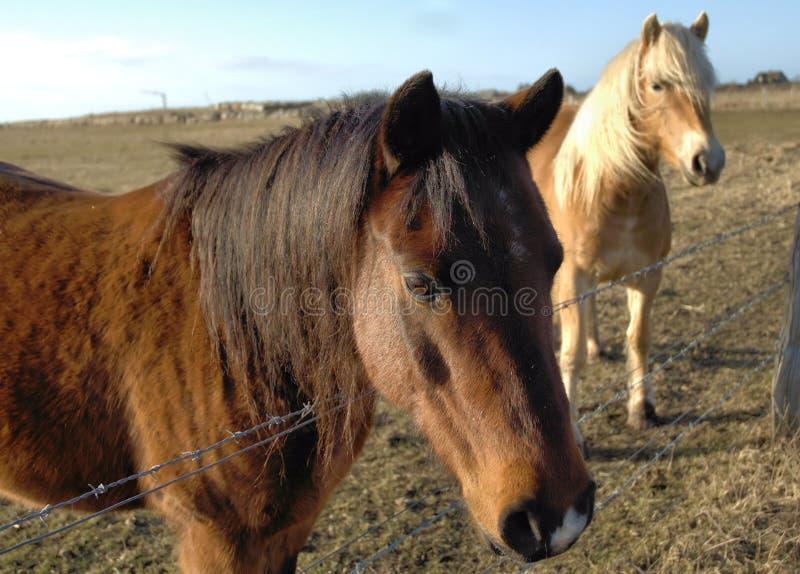 Hübsche Ponys lizenzfreie stockfotografie