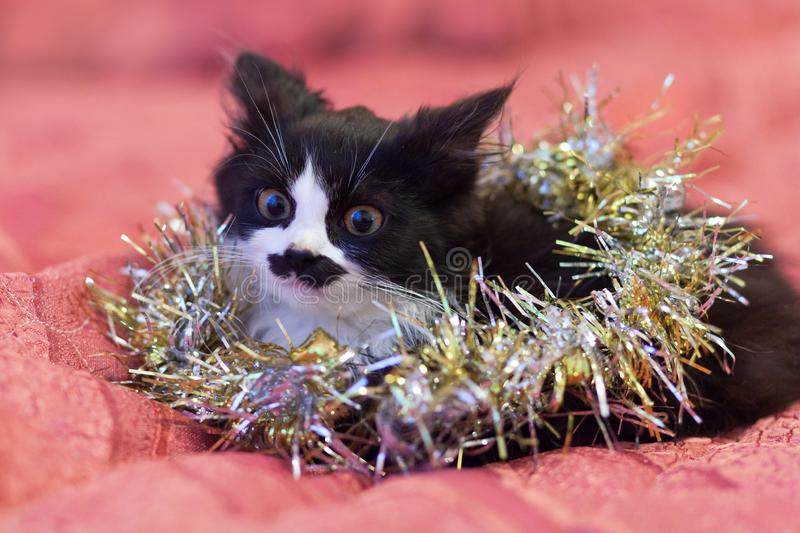 Hübsche Schwarzweiss-Katze bedeckt im silbernen Lametta - eine Weihnachtsmiezekatze Rosa Hintergrund stockfotografie