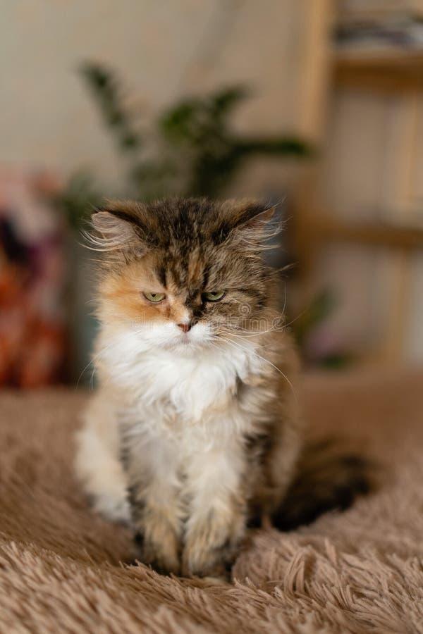 Hübsche traurige Katze sitzt auf einer Decke stockfotos