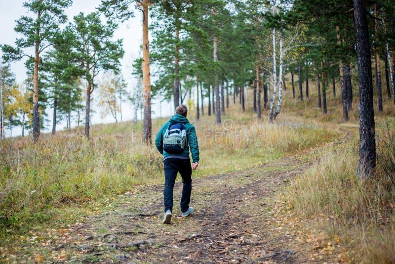 Hübscher bärtiger männlicher Tourist, der im Wald wandert lizenzfreie stockbilder