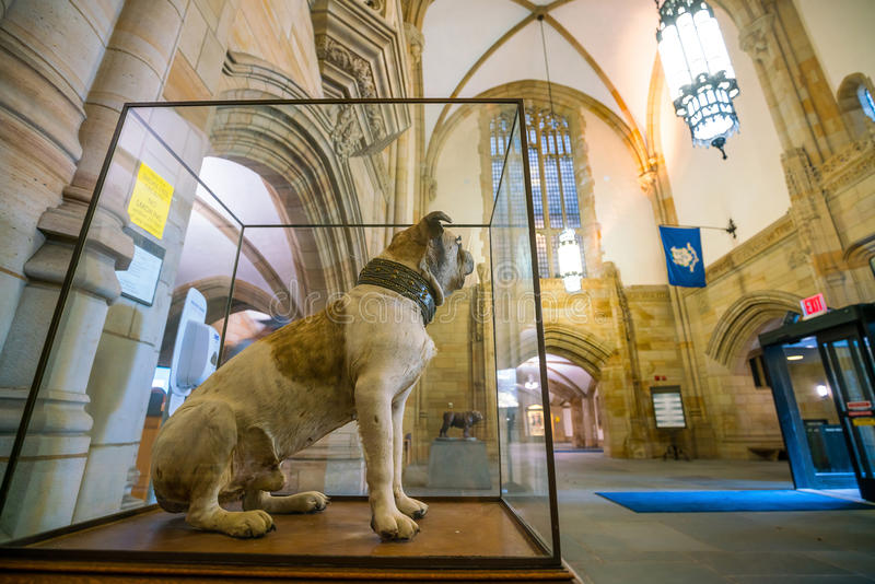 Hübscher Dan von Yale University lizenzfreie stockfotografie
