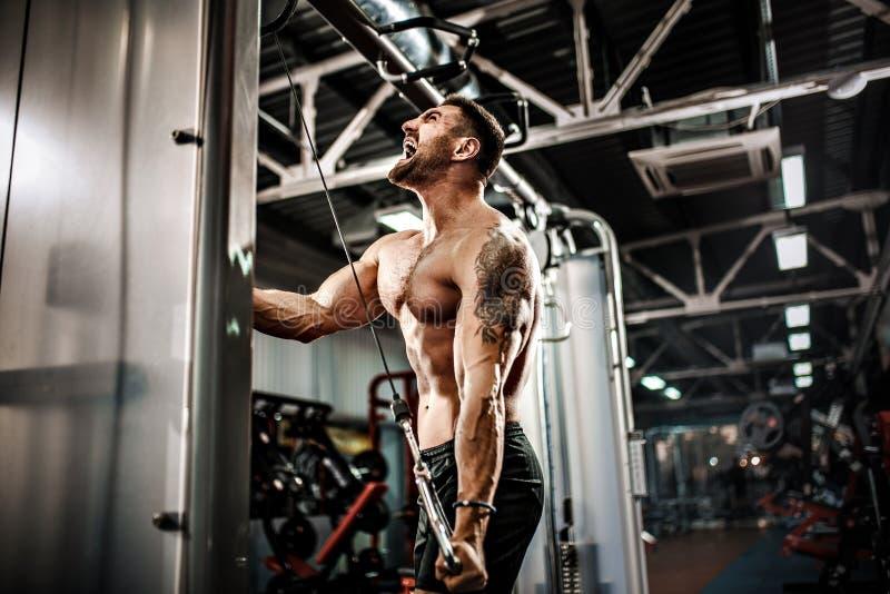 Hübscher muskulöser Eignungs-Bodybuilder, der Schwergewichts- Übung für Trizeps tut stockbild