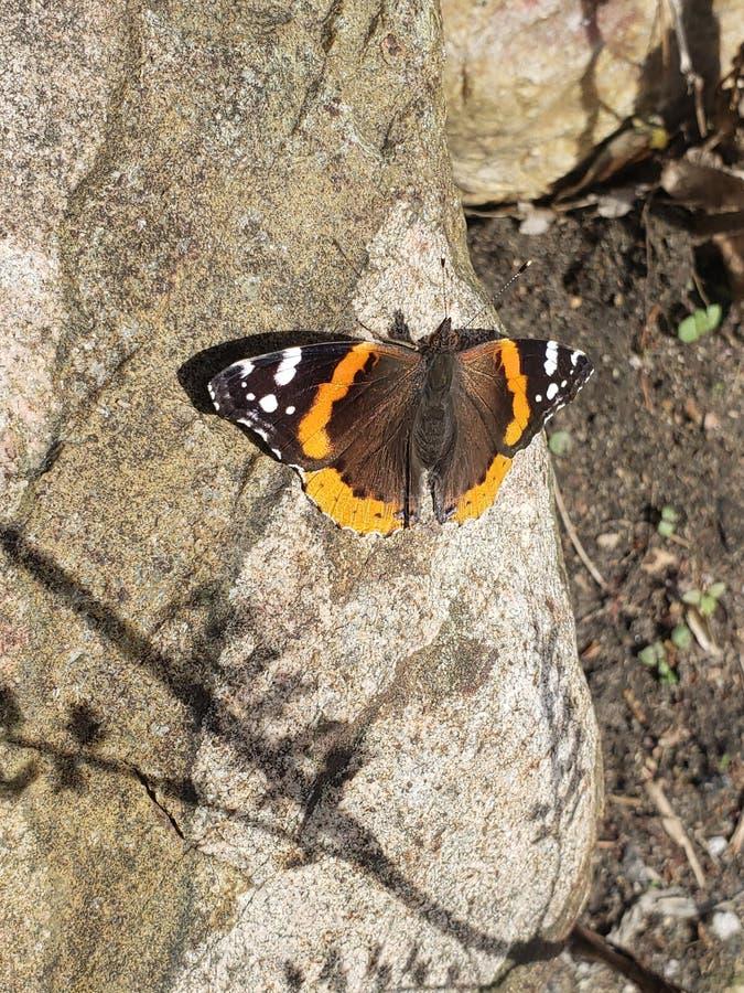 Hübscher orange Schmetterling stockfoto