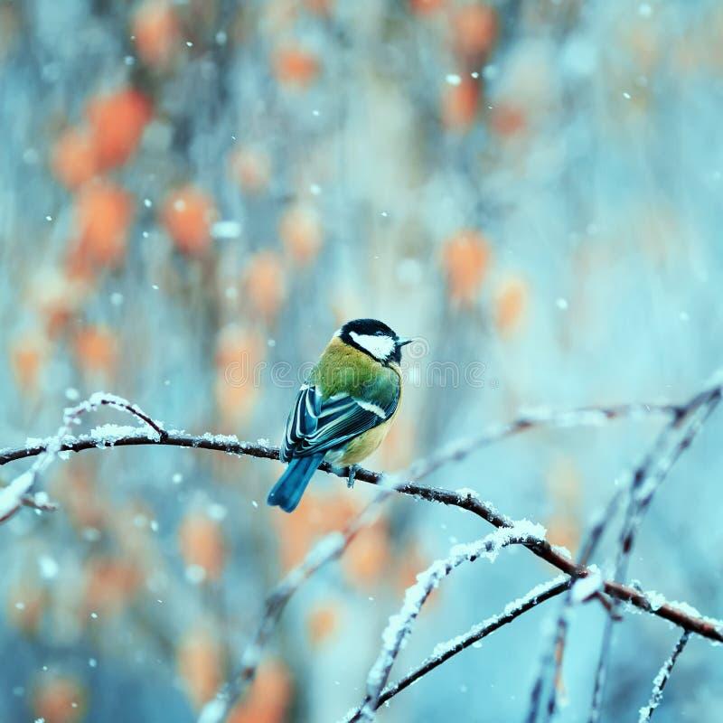 Hübscher Vogel, der im Park auf einer Niederlassung während des ersten sno sitzt stockbilder