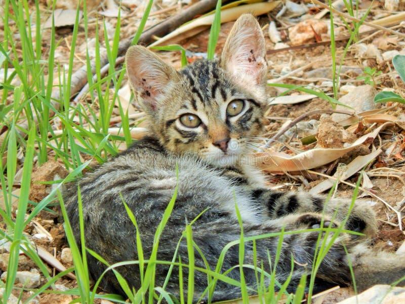 Hübsches Kätzchen lizenzfreie stockfotografie