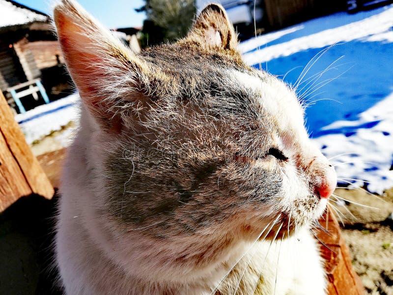 Hübsches Katzengesicht, das in der Sonne stillsteht lizenzfreie stockbilder