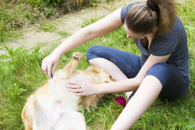 Hübsches Mädchen, das den Hund im Freien kämmt stockfotos
