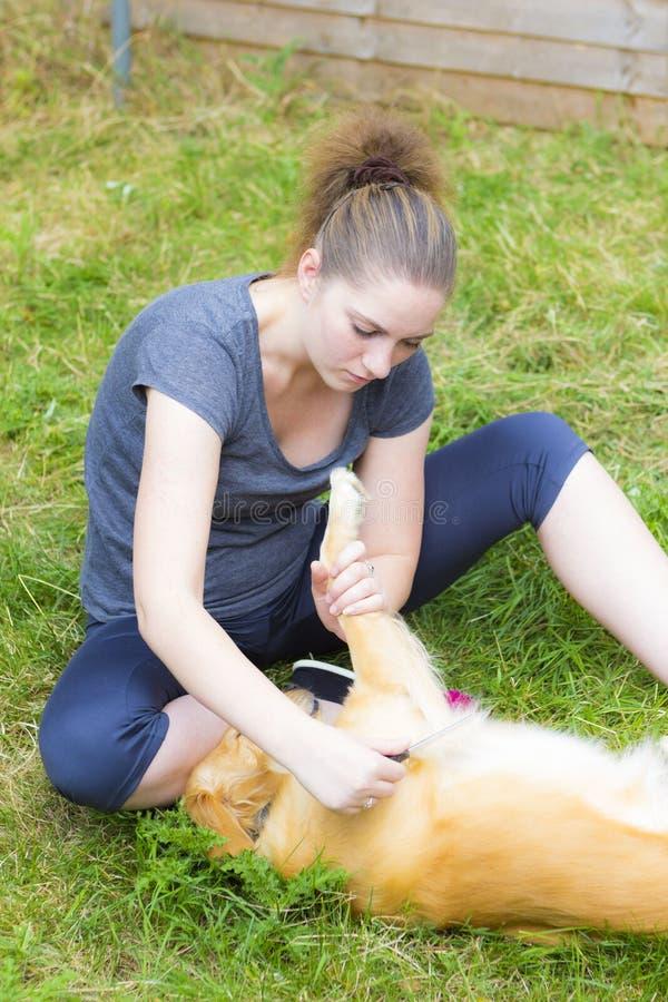 Hübsches Mädchen, das den Hund im Freien kämmt lizenzfreie stockbilder
