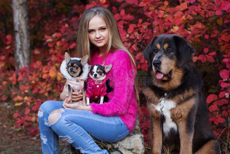 Hübsches Mädchen mit zwei Chihuahuahunden und -Mastiff lizenzfreie stockbilder