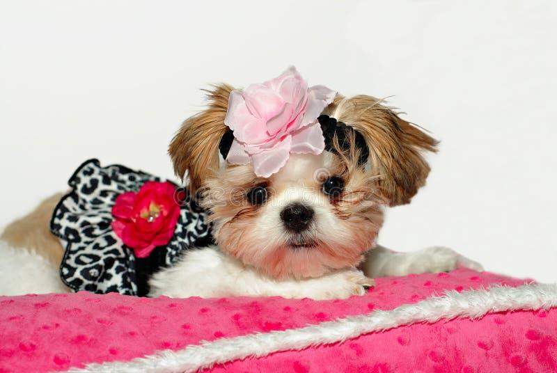 Hübsches Schätzchen lizenzfreie stockfotos