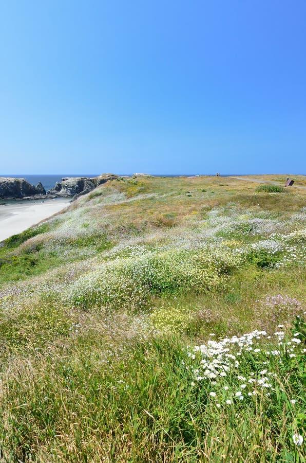 Hügel bedeckt mit den wilden Blumen, die Strand Bandon, Oregon USA übersehen stockfotos