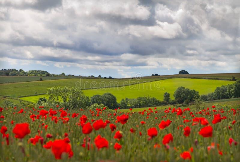 Hügel innen mit Feld der Mohnblumen nähern sich Leafield, Feldbetten lizenzfreies stockfoto