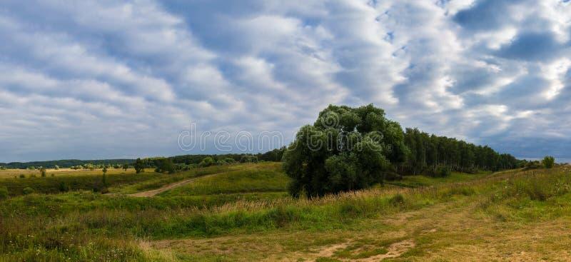 Hügel u. Bäume lizenzfreies stockbild