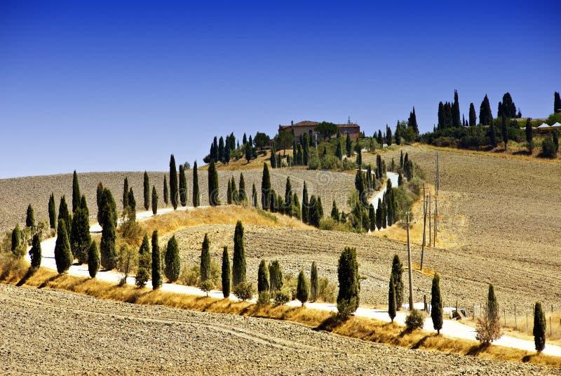 Hügel um Siena lizenzfreies stockbild