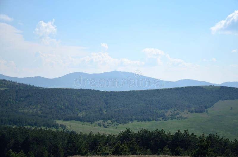 Hügel und Kiefern lizenzfreie stockfotografie