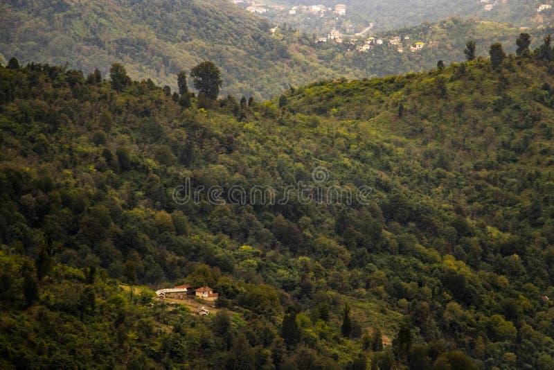 Hügel und Wald lizenzfreie stockfotografie