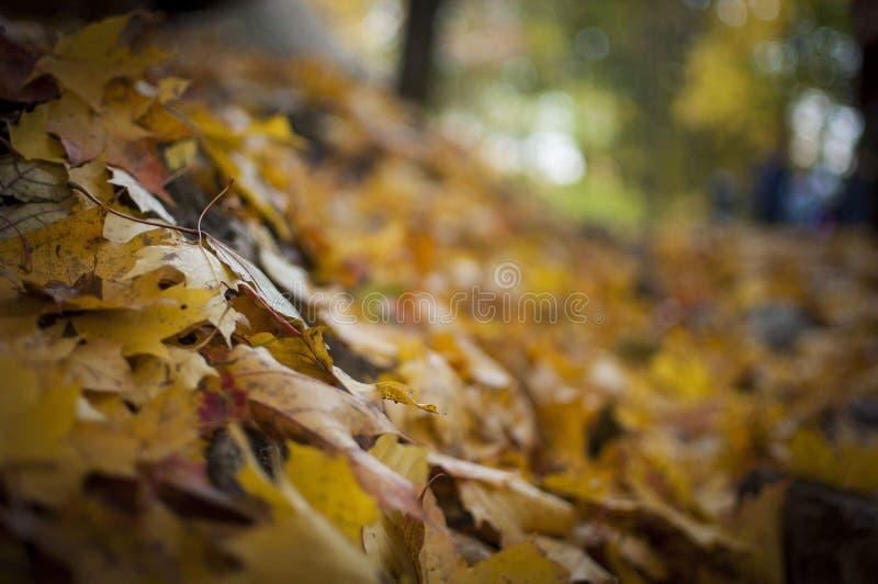 Hügel verlässt im Herbst lizenzfreies stockbild