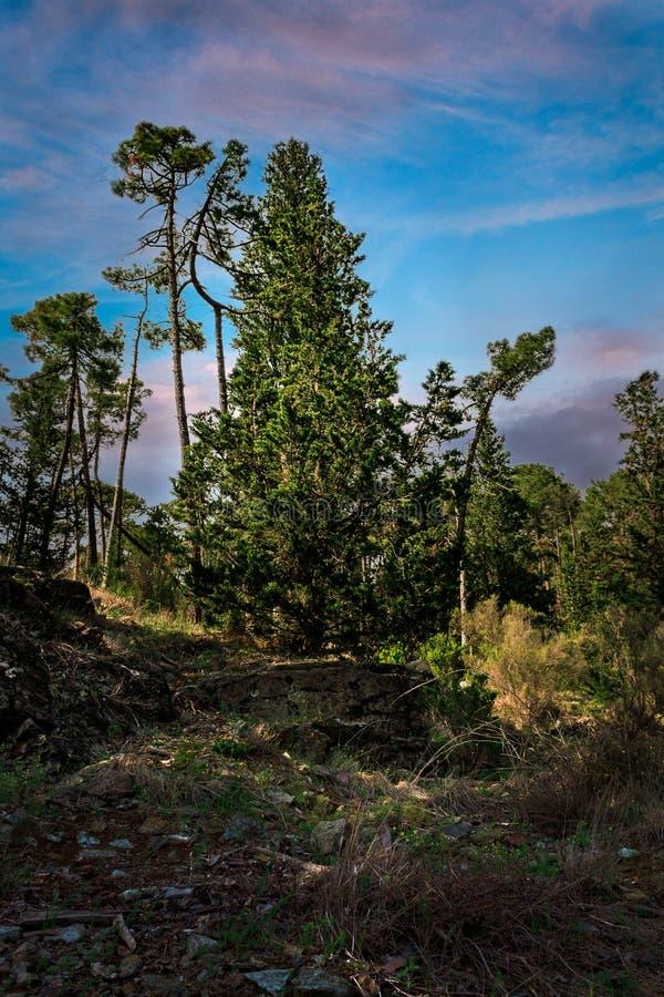 Hügel zu den Bäumen stockbild