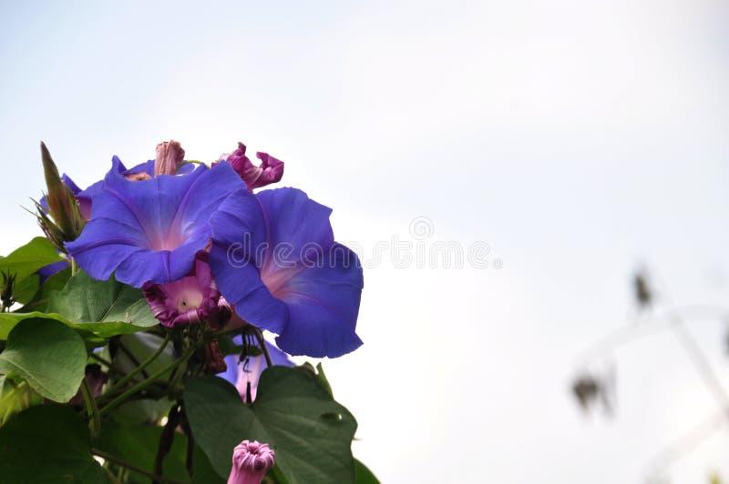 Hügelbezirke Lumajang der wildflowers-B29 lizenzfreie stockfotografie