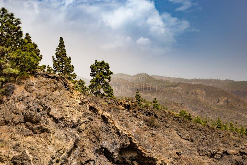 Hügelig, Vulkan Landschaft im Teide-Nations-Park mit Kiefern, Teneriffa, Spanien lizenzfreie stockfotografie