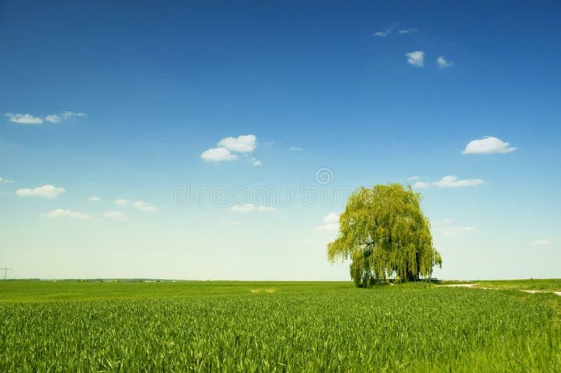 Hügelige Landschaft am Sommer lizenzfreie stockfotos