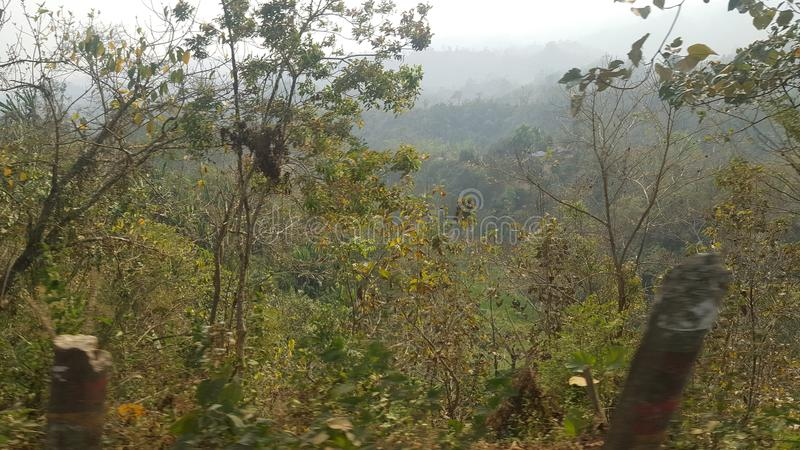 Hügelwald! Wildes Naturfotografie lizenzfreies stockbild