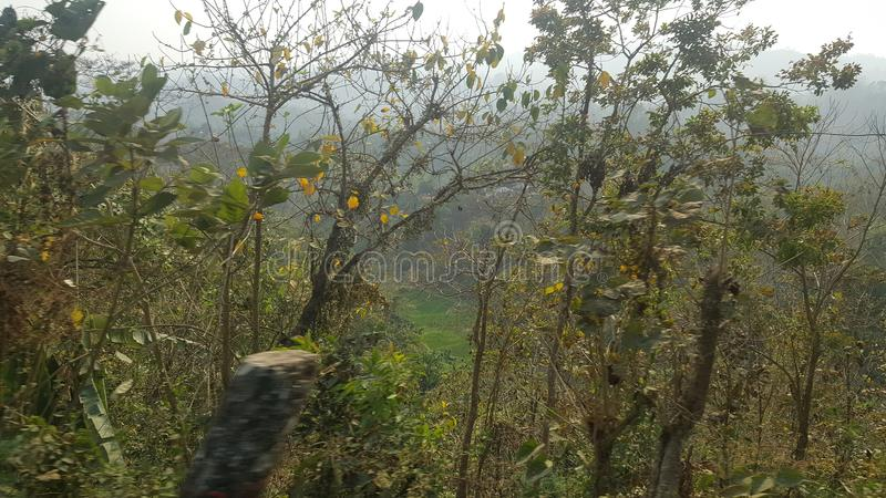 Hügelwald! Wildes Naturfotografie lizenzfreie stockfotografie