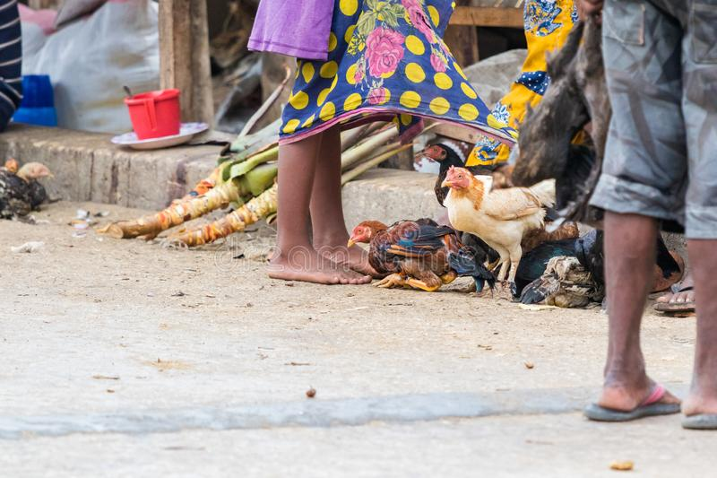 Hühner auf der Straße nahe bei den Verkäufern bereit, von den Händlern in Toliara verkauft zu werden madagaskar lizenzfreies stockbild