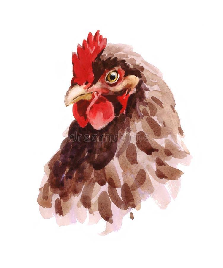 Hühneraquarell-Illustrations-Hand gezeichnet stock abbildung