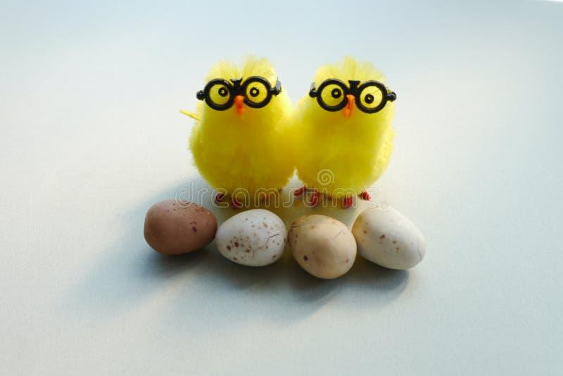 Hühnerblick und -stand mit Eiern lizenzfreie stockbilder
