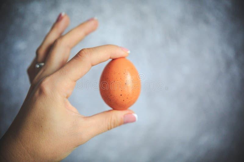 Hühnerei im Oberteil auf dem grauen und weißen Hintergrund, der in der Hand hält lizenzfreie stockfotografie