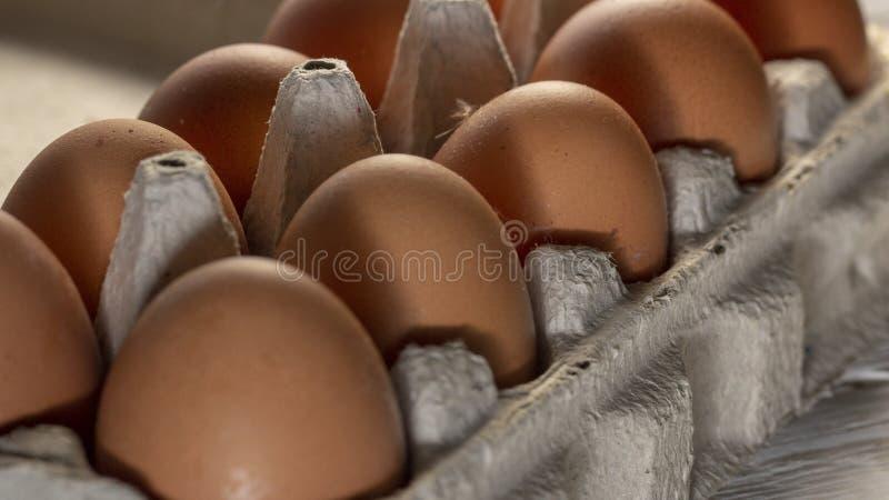 Hühnereien im Pappgestell oder im Eikasten auf weißer Tabelle lizenzfreie stockfotos