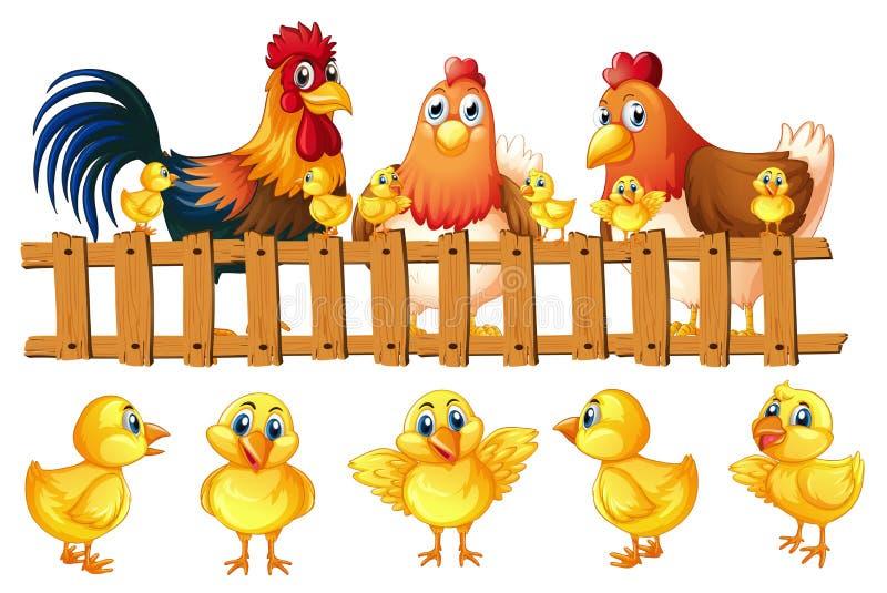 Hühnerfamilie mit fünf kleinen Küken lizenzfreie abbildung