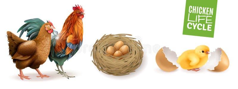 Hühnerlebenszyklus-Satz vektor abbildung