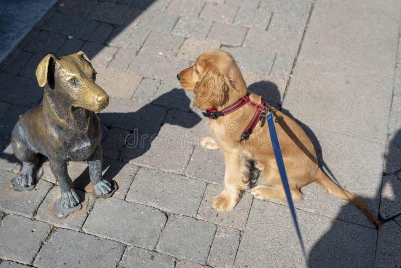 Hündchen cocker spaniel, das eine Hundestatue plooking ist lizenzfreies stockfoto