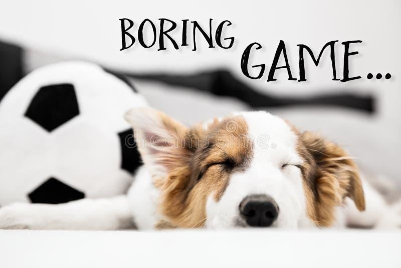 Hündchen, das auf der Couch, langweiliges Spiel des englischen Textes schläft stockfotos