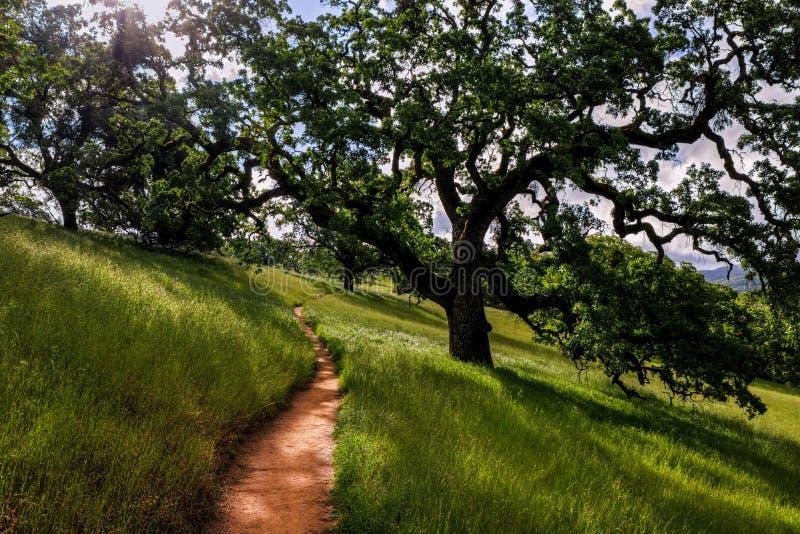 Hürden-Spur, Henry Coe State Park stockfotos