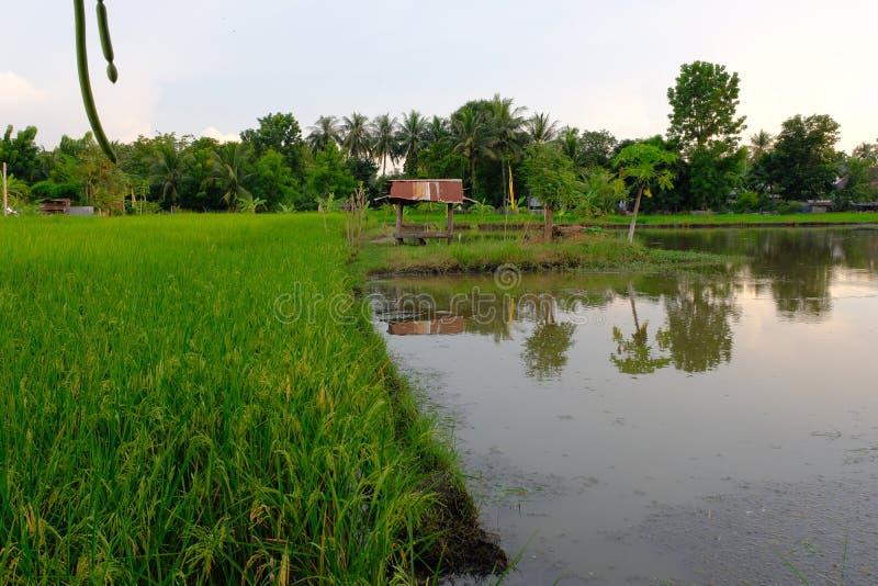 Hütte auf dem Reisgebiet bei Sonnenuntergang Thailand Asien lizenzfreie stockfotografie