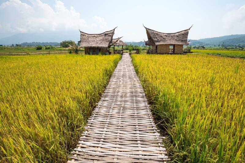 Hütten- und Reisfeld mit Bambusbrücke in der Natur mit blauem Himmel stockfotos