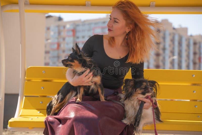 H?bsche gl?ckliche redheaded Frau mit zwei wenigen Hunden auf der gelben Sommerbank lizenzfreies stockbild
