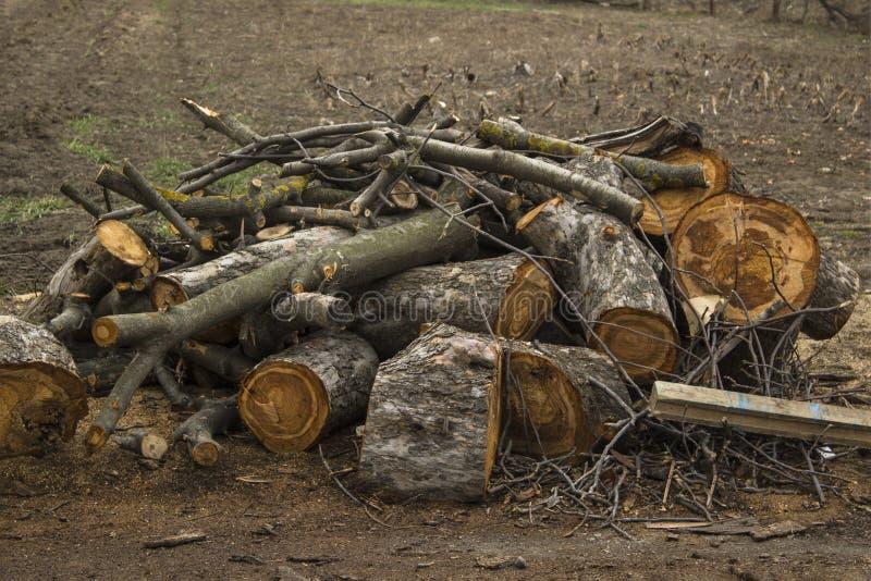 H?g av vedtr?t Trävedträ på jordning Förberedelseträn för vinter Tr? texturerar arkivbilder