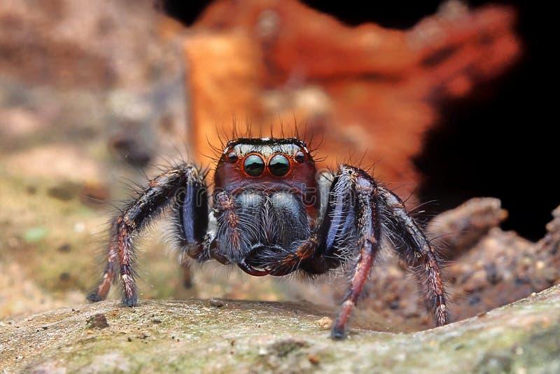 h?g spindel f?r foto f?r banhoppningmakrof?rstoring fotografering för bildbyråer