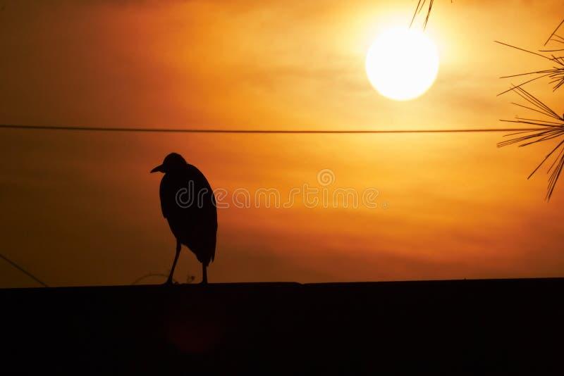 H?geranseende i solnedg?ngen i panelljus royaltyfri fotografi