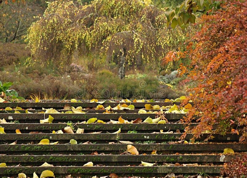 H?henpark hermoso Killesberg en Stuttgart en Alemania foto de archivo libre de regalías