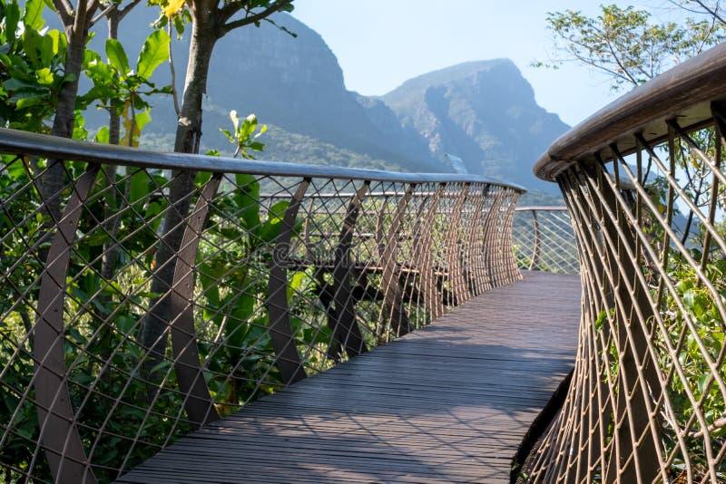 H?jd g?ngbana f?r tr?dmarkis p? Kirstenbosch botaniska tr?dg?rdar, Cape Town, Sydafrika arkivbilder