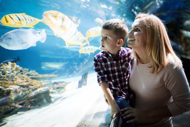 H?llande ?gonen p? havsliv f?r moder och f?r son i oceanarium arkivfoto