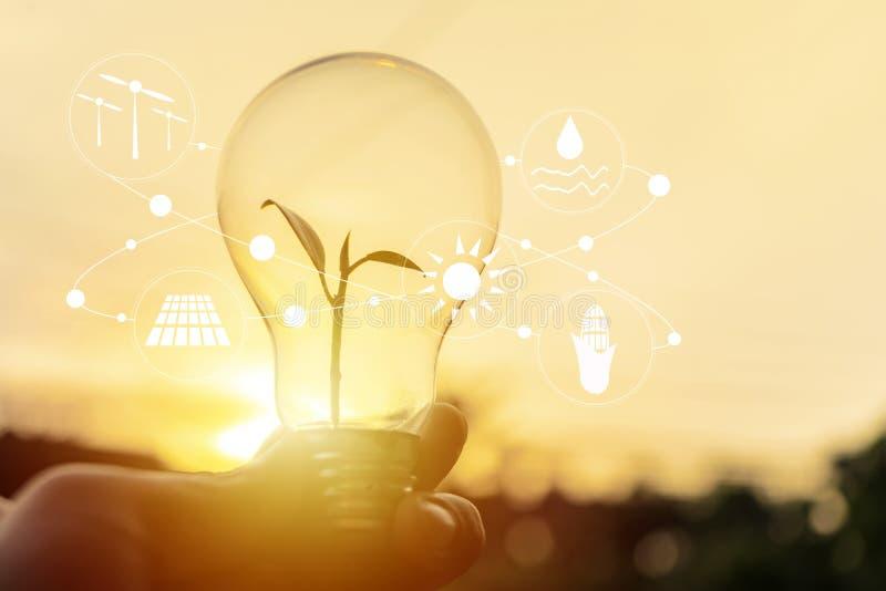 H?llande ljus bulbt f?r hand m?nga begreppsekologibilder mer min portf?lj royaltyfri fotografi