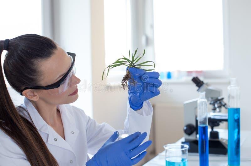 H?llande planta f?r biolog ovanf?r exponeringsglas f?r prov fotografering för bildbyråer