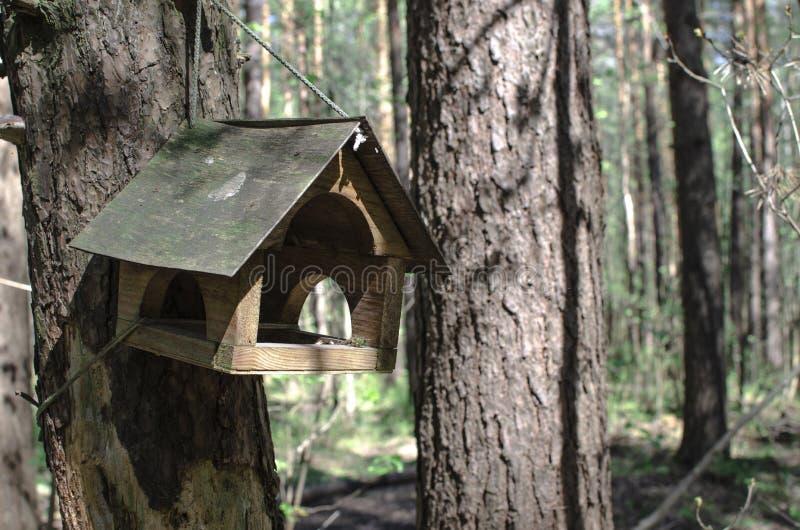 H?lzernes Vogelhaus h?ngt an einem Baum in einem gr?nen Wald stockbild
