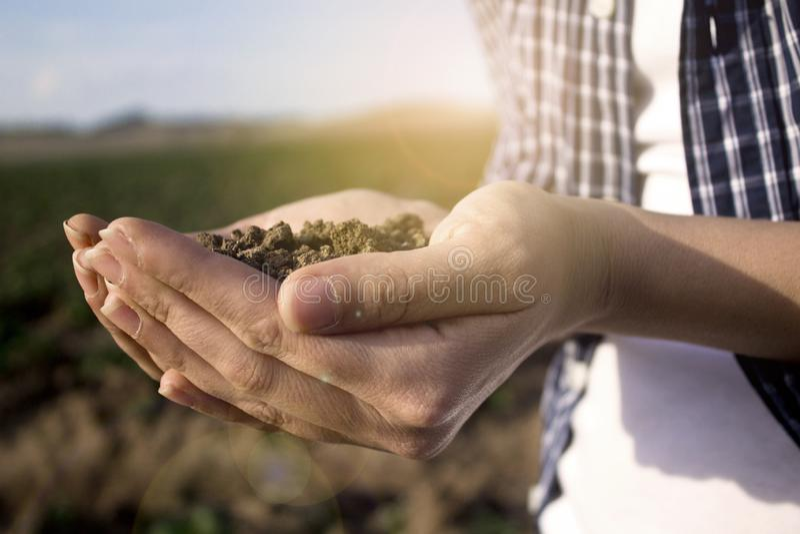 H?nder som rymmer jord i jordbruks- f?lt royaltyfria foton